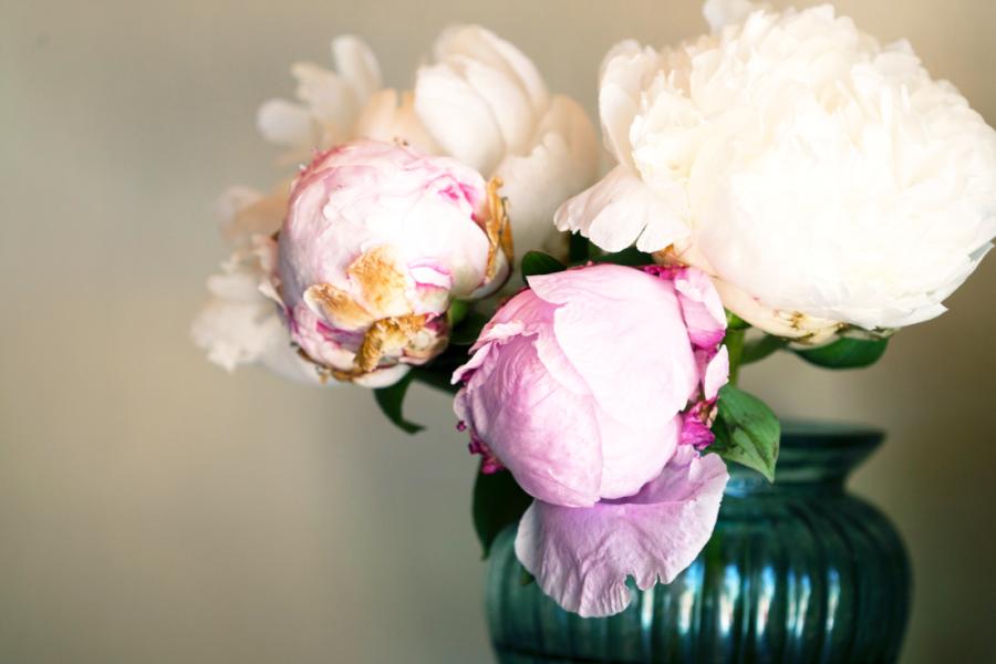 beautiful-bloom-blossom-1608527.png