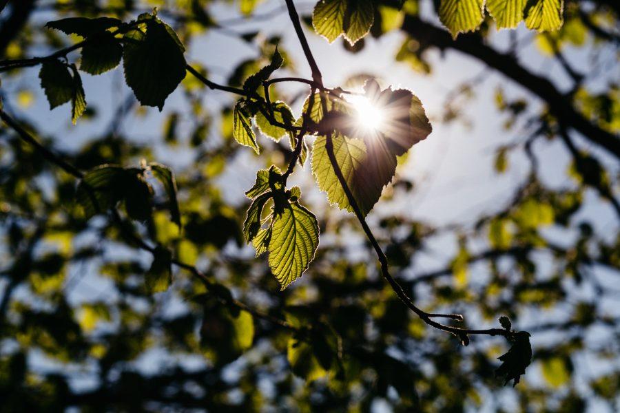 pexels-photo-437744