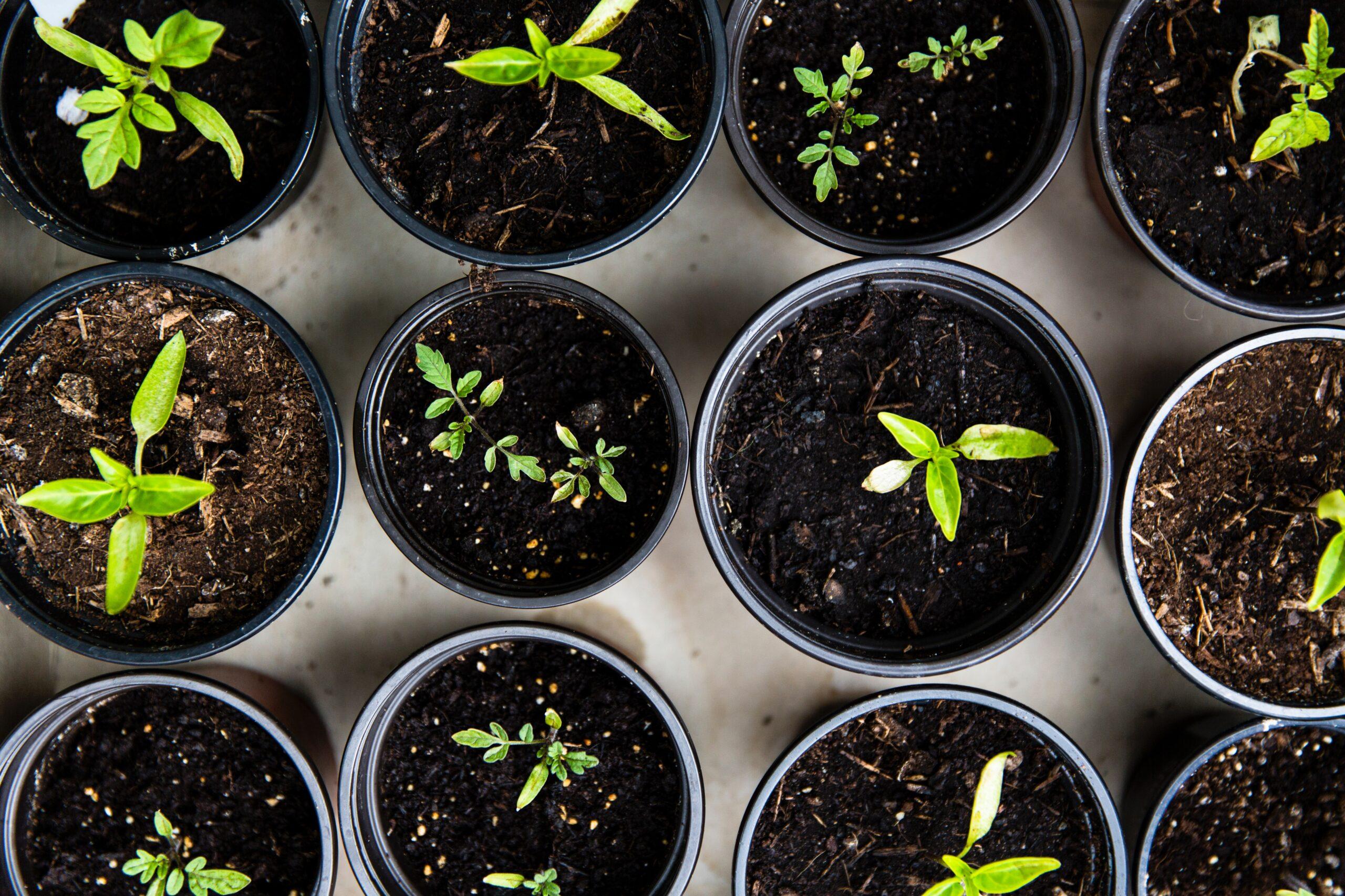 hemester, plantera, trädgård